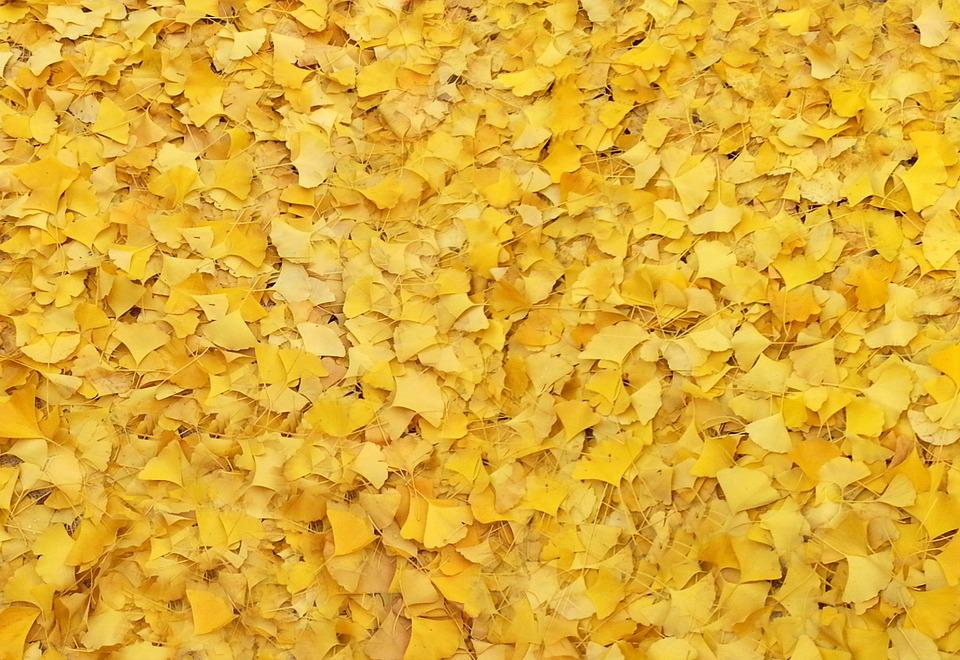Bank Leaves, The Leaves, Autumn