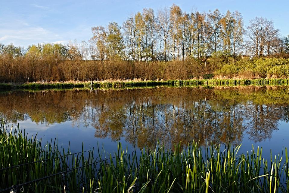Fishing, South Bohemia, Ledenice, Surface, Pond, Bank