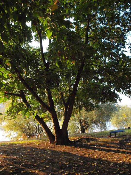 Tree, Park, Main, River, Morgenstimmung, Bank