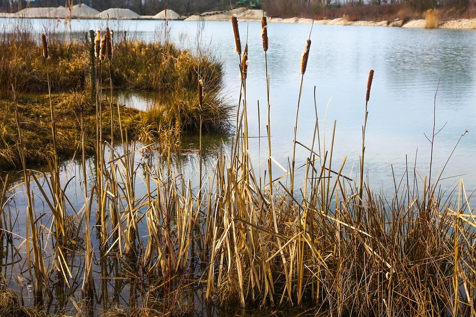 Water, Reed, Lake, Fantasy, Orange, Evening, Bank