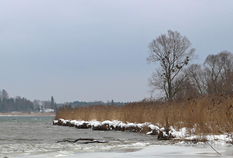 Winter, Snow, Bank, Reed, Trees, Wintry, Lake, Ice