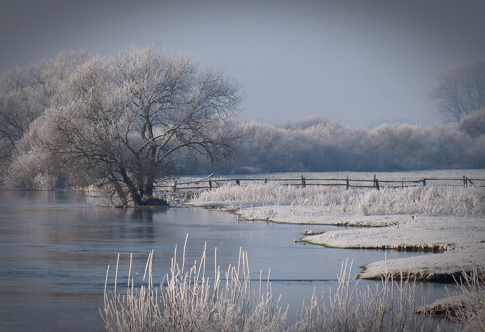 Winter, Bank, River, Trees, Snow, Mood, Frosty, Wintry