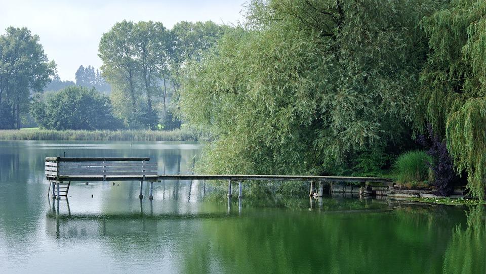 Boardwalk, Web, Pier, Water, Lake, Nature, Green, Bank