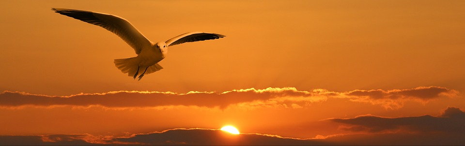 Banner, Header, Gull, Bird, Fly, Clouds, Orange, Sunset