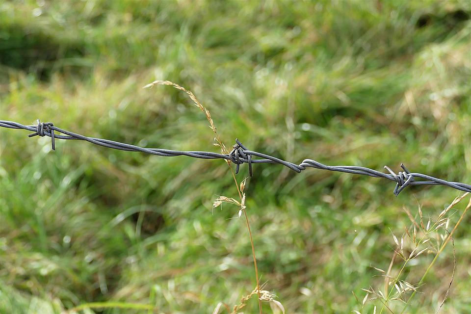 Barbed Wire, Blades Of Grass, Close, Pasture Fence