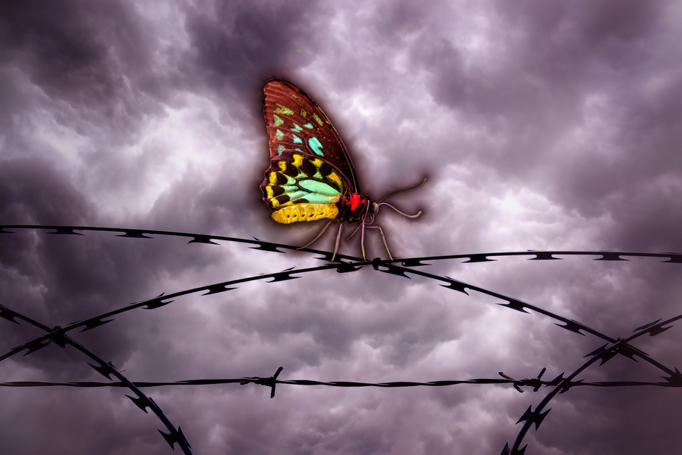 Butterfly, Barbed Wire, Sky, Clouds, Freedom, Caught