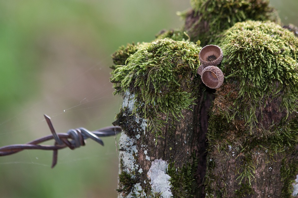 Barbed Wire, Fence, Pasture, Limit, Moss, Post, Old