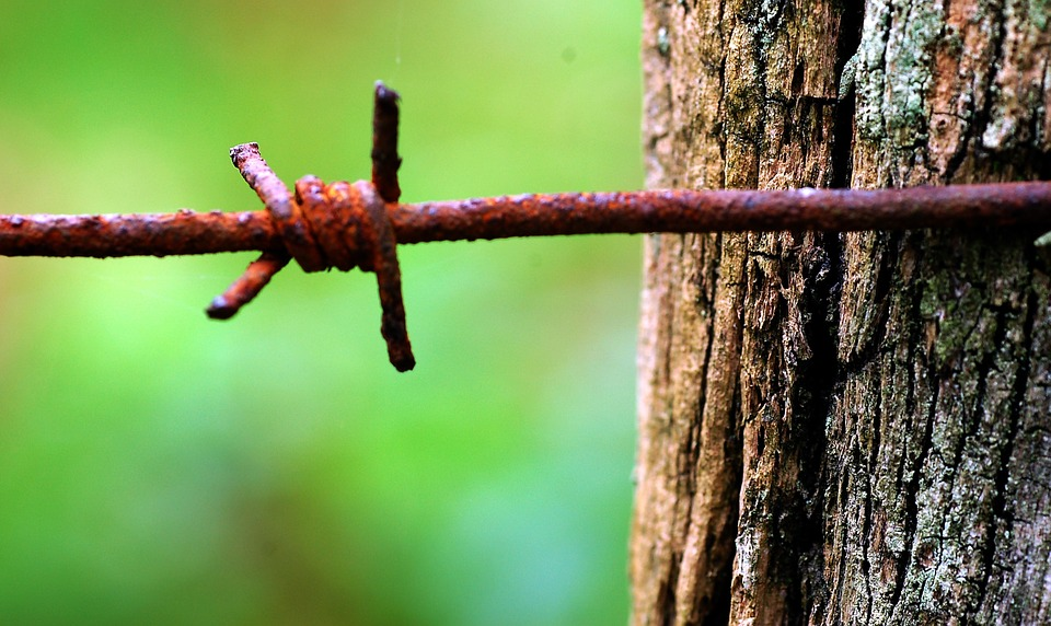 Oxide, Barbed Wire, Wood, Nature, Euskadi
