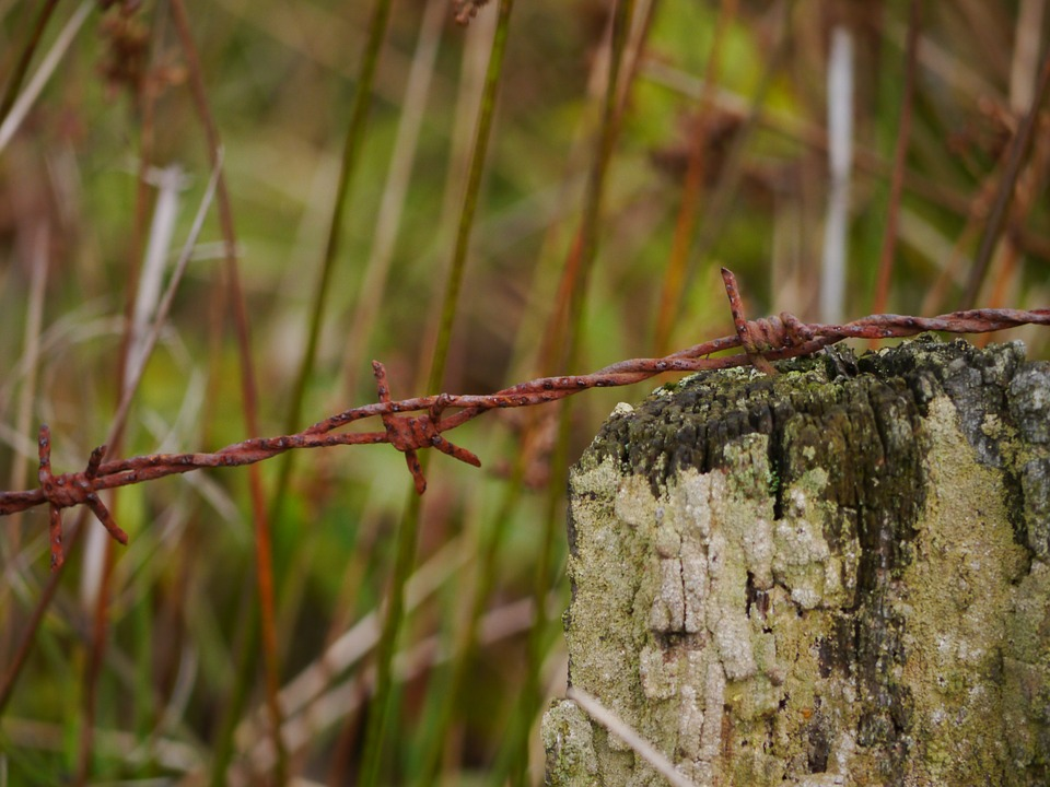 Barbed Wire, Stainless, Metal, Wire, Rusted, Thorn