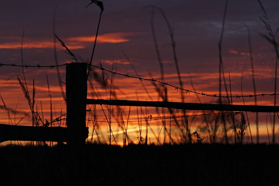 Sunset, Barbed Wire Fence, Meadow, Barbed Wire