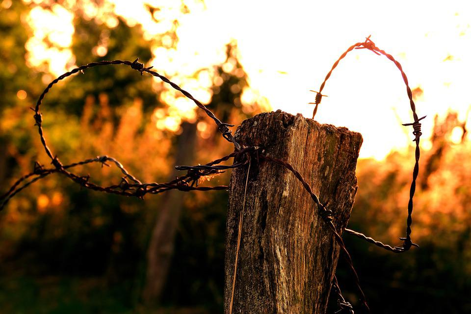 Barbed Wire, Evening, Sunset, Farmland