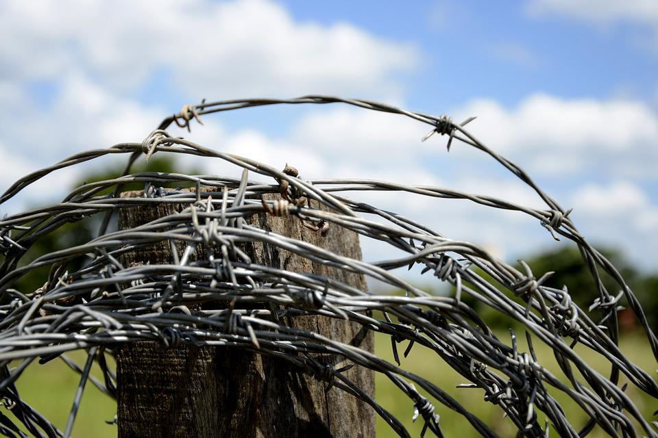 Wire, About, Cattle, Barbed Wire, Farm, Barbs