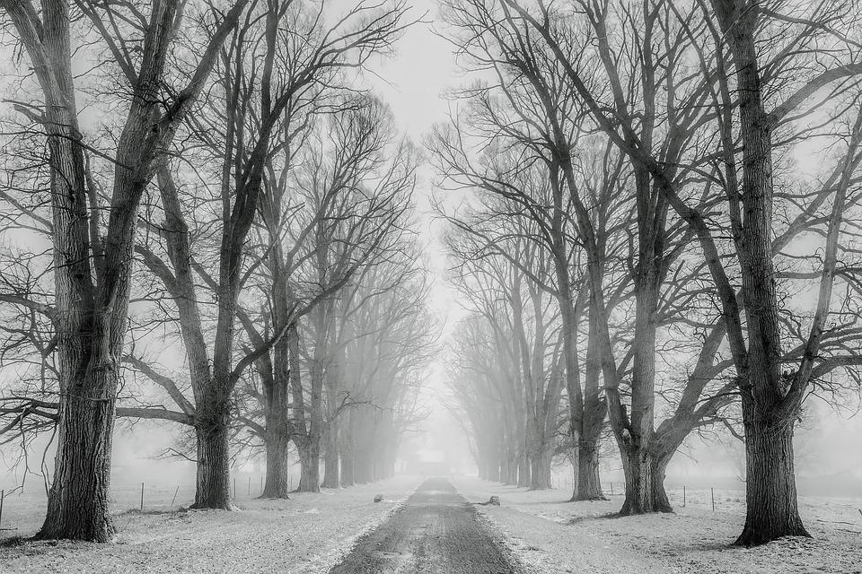 Snow, Trees, Avenue, Tree Lined, Bare Trees, Snowy