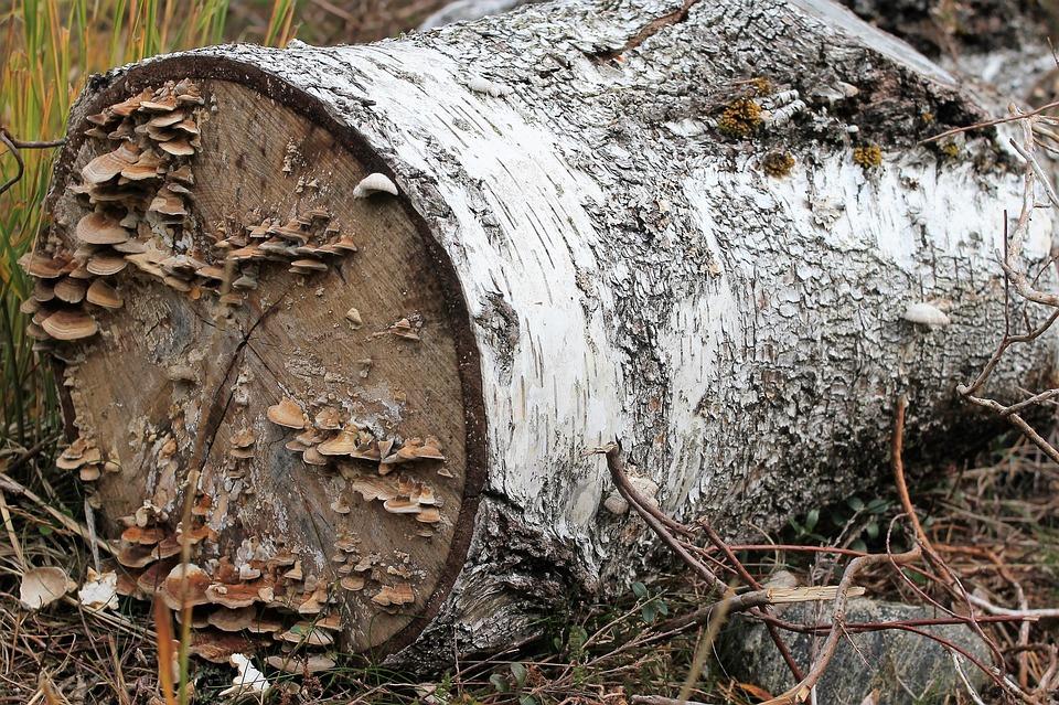 Log, Mushrooms, By, Forest, Bark, Autumn