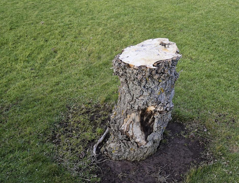Tree, Stump, Nature, Wood, Trunk, Timber, Bark, Grass