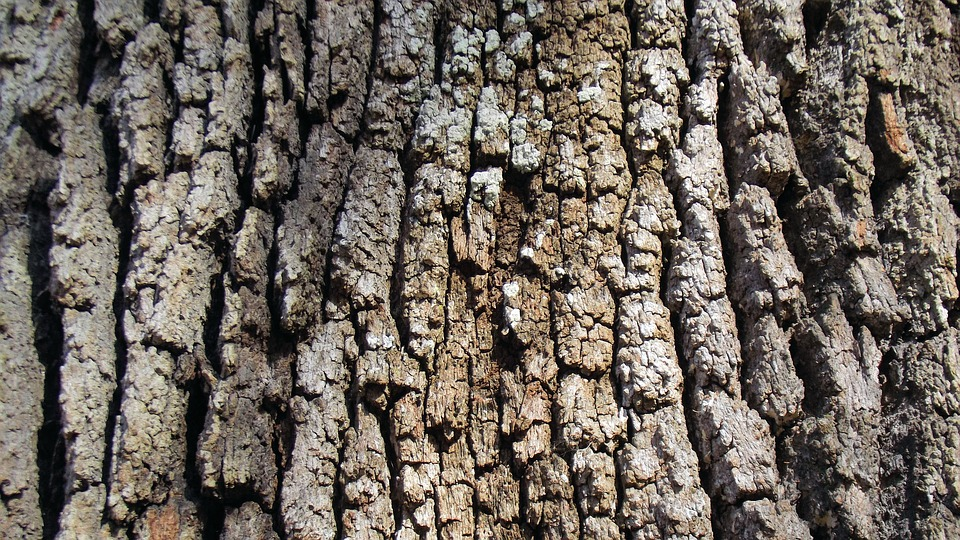 Live Oak Tree, Bark, Brown, Grey, Texture, Oak, Nature