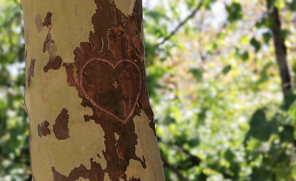 Tree, Heart, Love, Bark, Romance, Valentine's Day