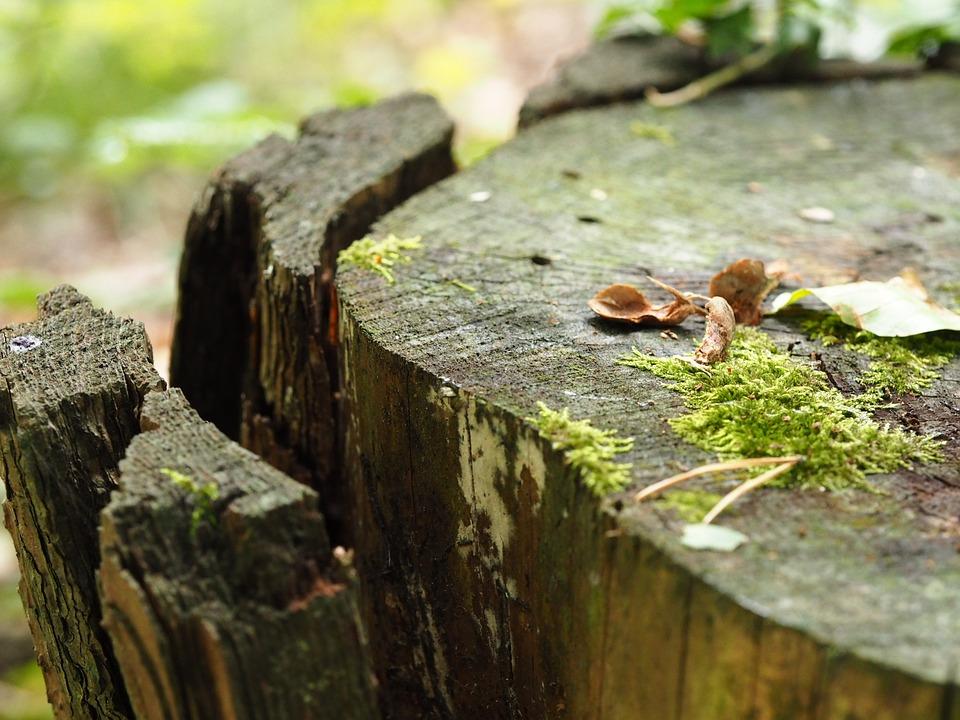 Wood, Moss, Pattern, Structure, Old, Tree Stump, Bark