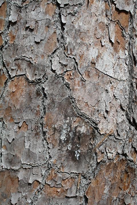 Tree, Bark, Texture, Natural, Wood