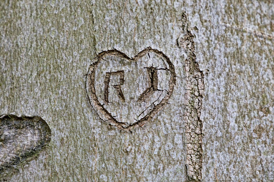 Tree, Bark, Notch, Carved, Name, Wood, Nature, Love