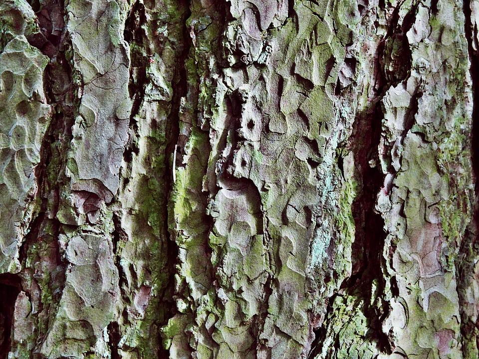 Tree, Bark, Log, Nature, Structure, Forest, Wood