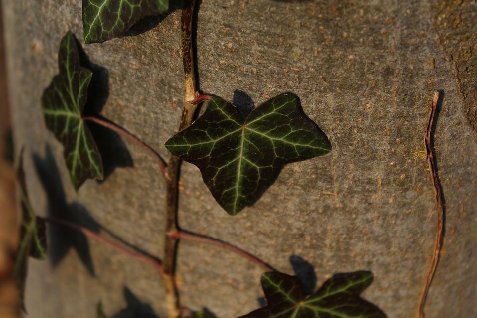 Ranke, Log, Overgrown, Plant, Green, Bark