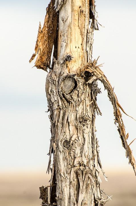 Post, Bark, Peeling, Rustic, Western, Vintage, Wood