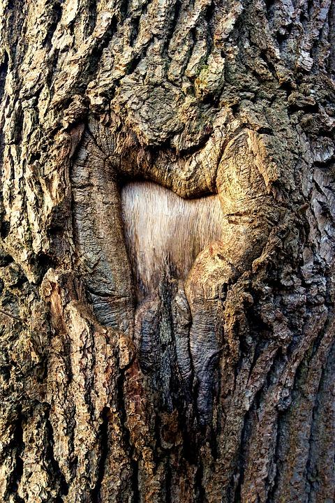 Tree, Trunk, Tree Trunk, Bark, Scar, Scarred Tree
