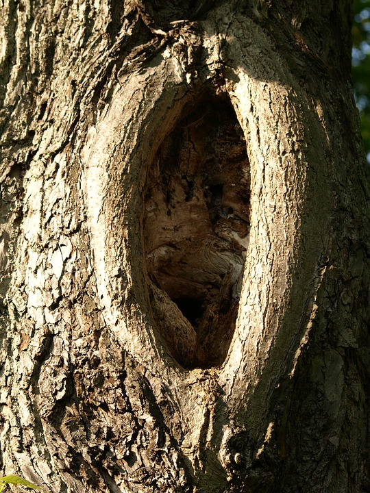 Knothole, Log, Gnarled, Tree Bark, Wood, Bark, Tribe