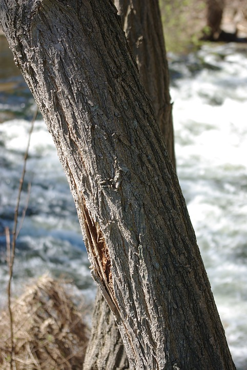 Tree, Wood, Nature, Outdoor, Bark
