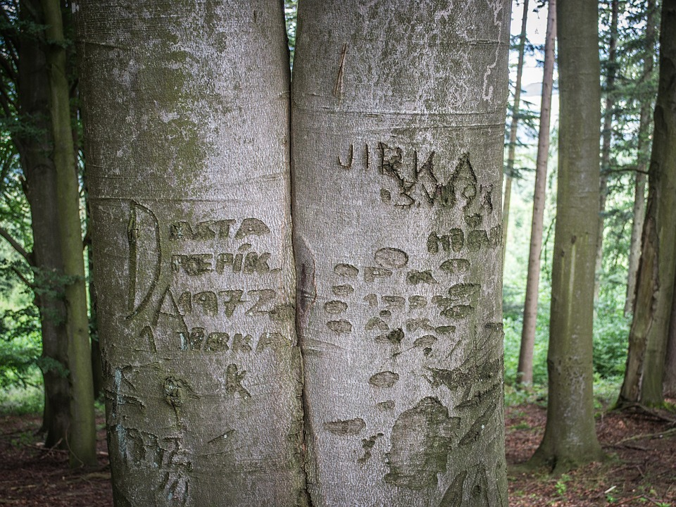 Forest, Tribes, Trunk, Bark, Tree Bark