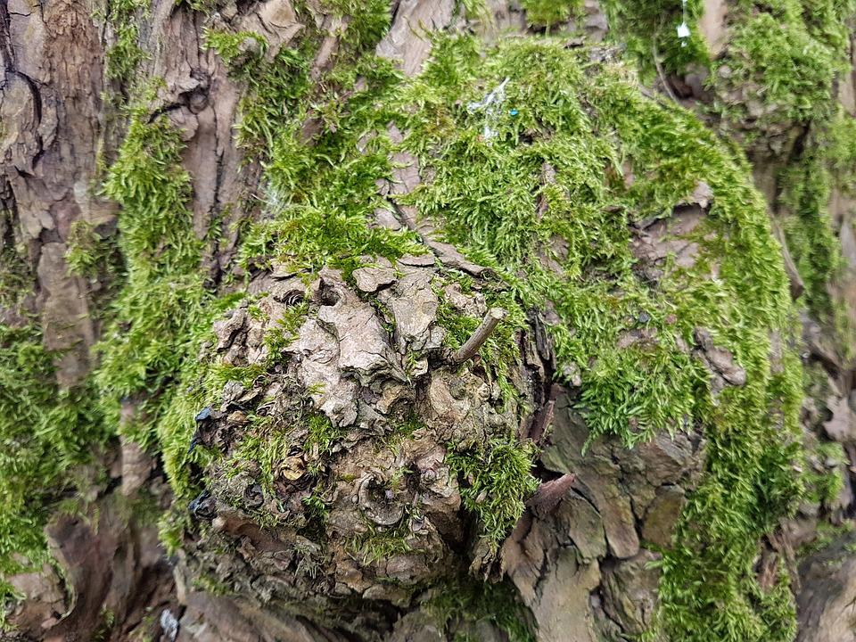 Nature, Flora, Tree, Leaf, Wood, Moss, Trunk, Bark
