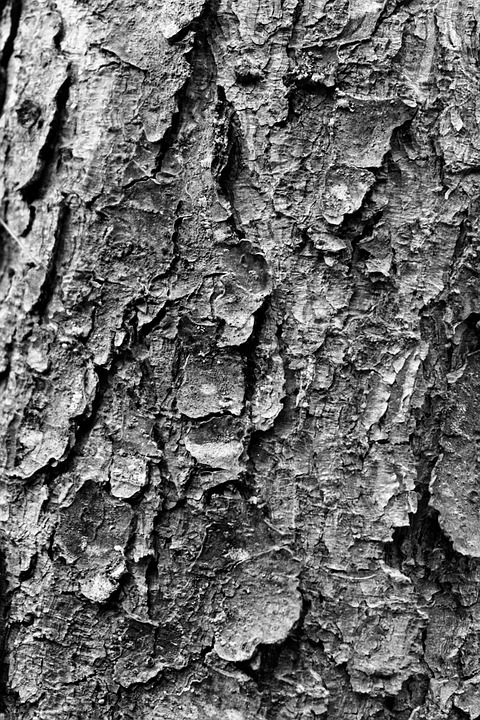 Tree, Trunk, Texture, Bark, Black And White