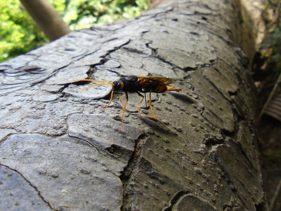 Insect, Tree Bark, Bark, Nature, Wood, Brown, Trunk
