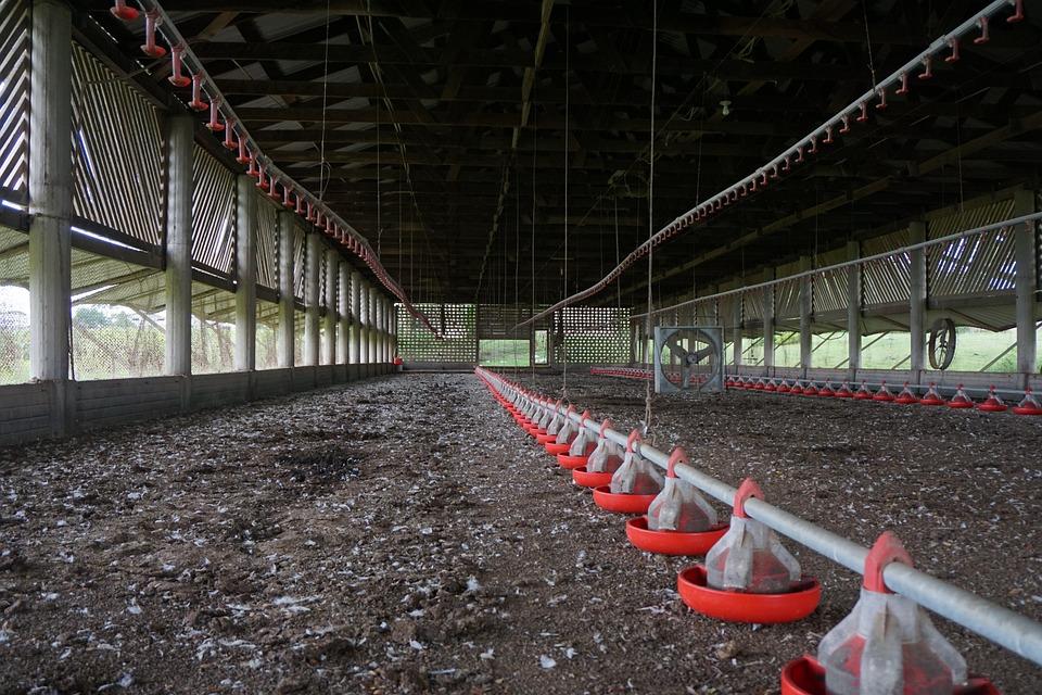 Barn, Feeders, Farm, Industry, Chicken Barn, Manure