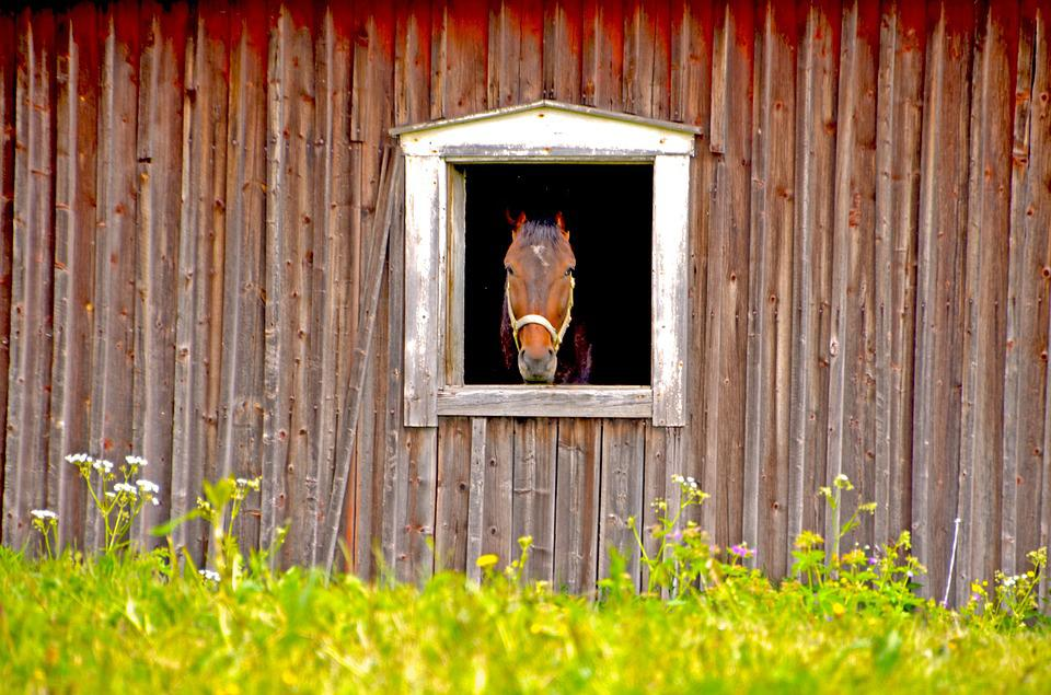 Horse, Barn, Stall, Summer, Animals, Animal World