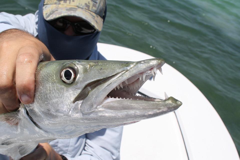 Key West, Florida, Fishing, Angling, Barracuda, Usa