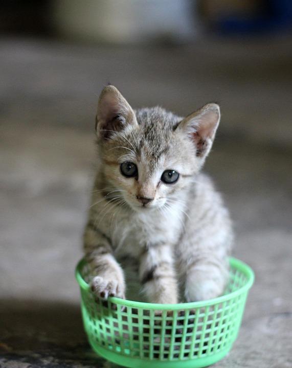 Kitten, Cat, Basket, Cute, Pet, Feline, Animal
