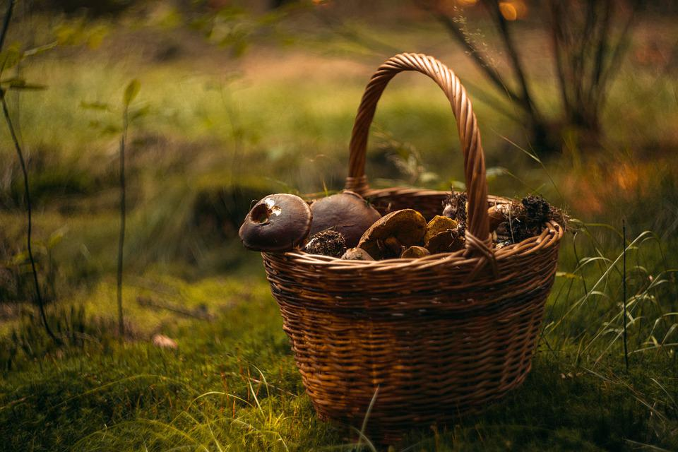 Fungus, Basket, Mushrooms, Forest, Autumn