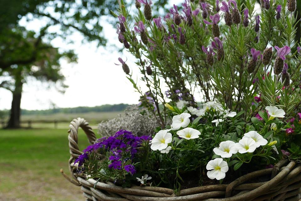 Flower, Plant, Basket, Flower Pot, Decoration, Flora
