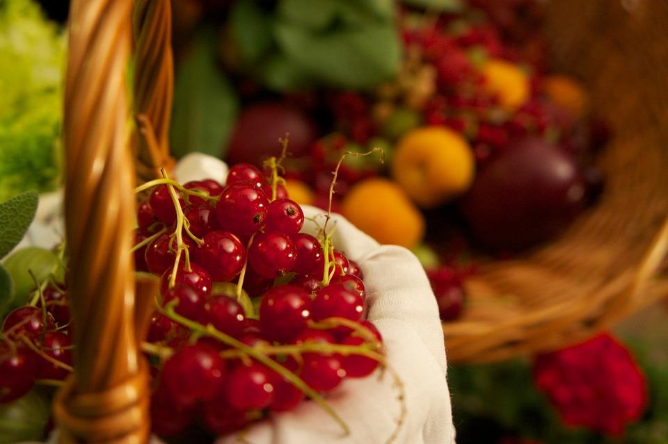 Red Currant, Berry, Red, Vintage, Mature, Fruit, Basket