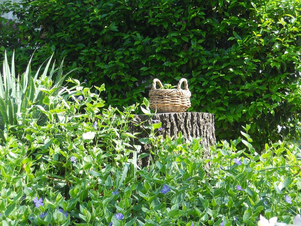 Basket, Stump, Garden, Green, Wood, Forest, Outdoors