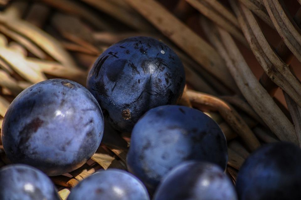 Damons, Basket, Harvest, Harvesting, End Of Season