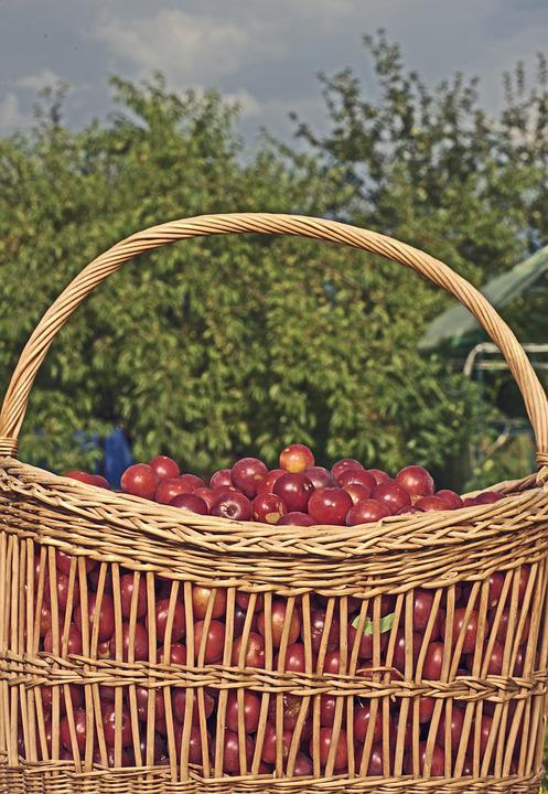 Basket, Plum, Frisch, Fruit Basket, Nature, Delicious