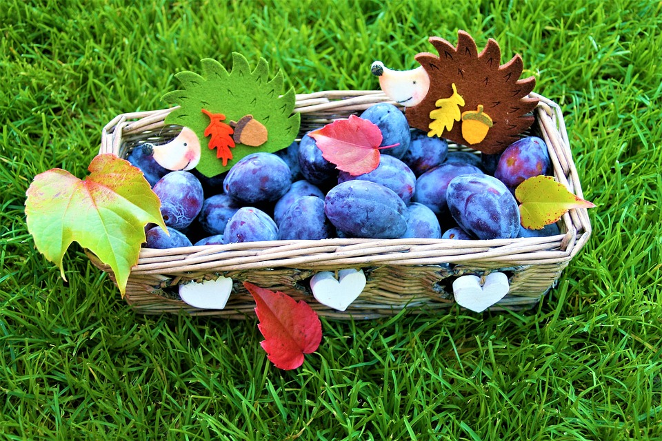 Autumn, Basket, Plum, Positive, Decoration, Grass
