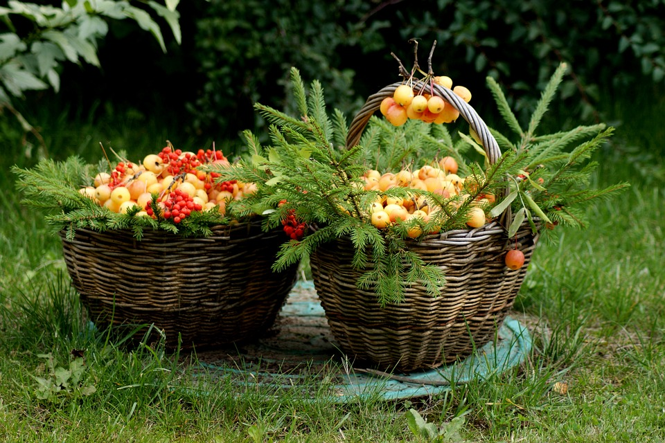 Forest, Basket, Apples, Summer, Flowers
