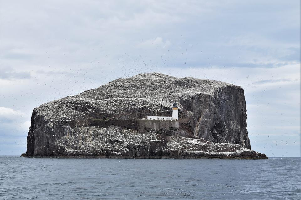 Bass Rock, Gannets, Seabird, Colony, Bird, Forth, Firth
