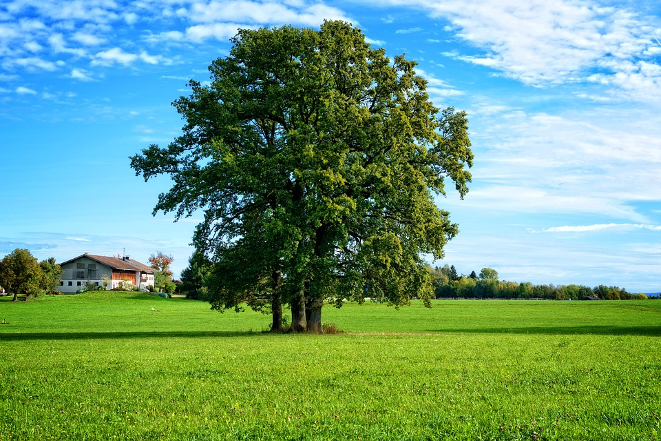 Tree, Individually, Landscape, Chiemgau, Bavaria