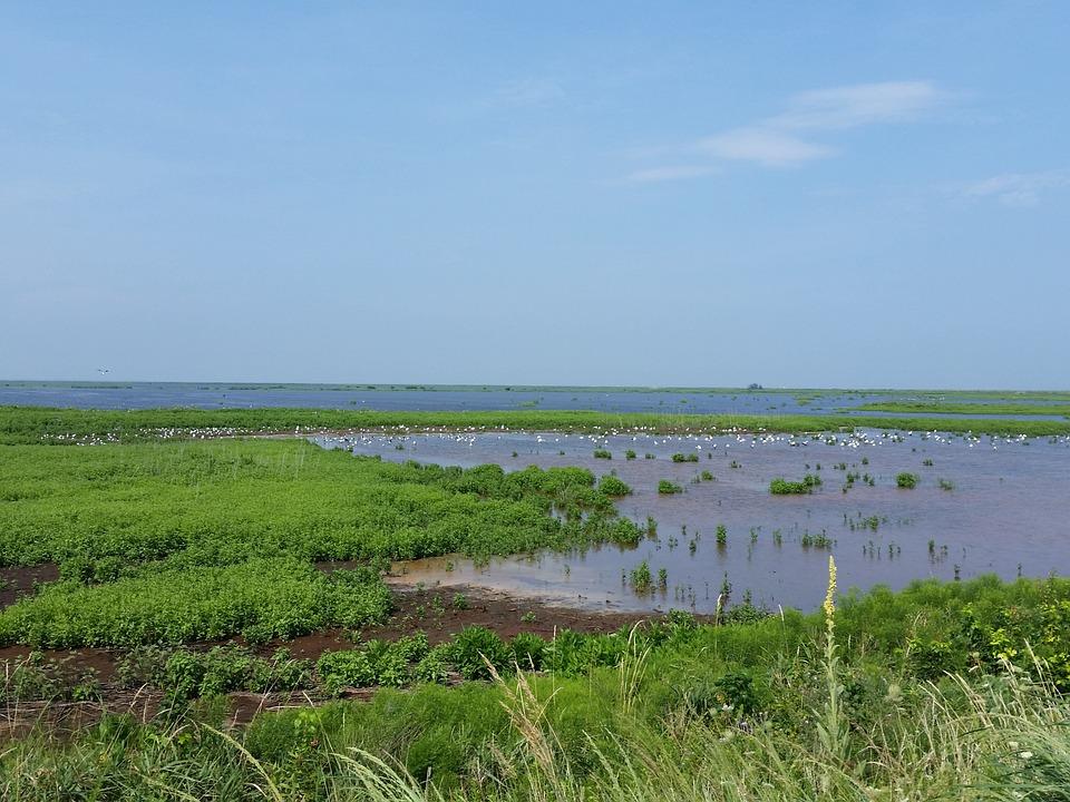 Wildlife, Birds, Water, Animals, Park, Bay, Swamp