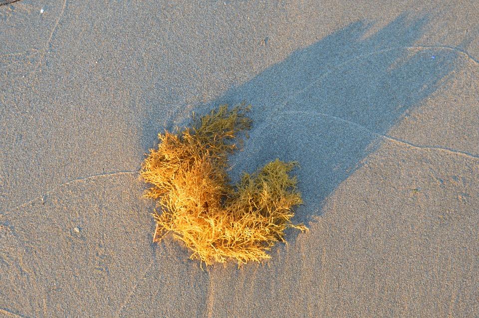 Beach, Sand, Spain, Algae, Sea, Landscape